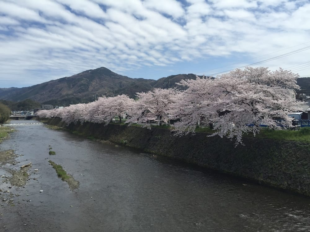 Mount Hiei with Cherry Blossom Japan